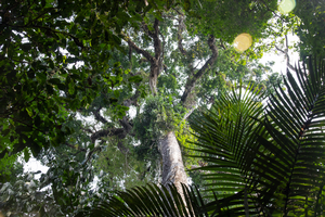 MSU leads $1.12M NSF grant to study tropical forest drought